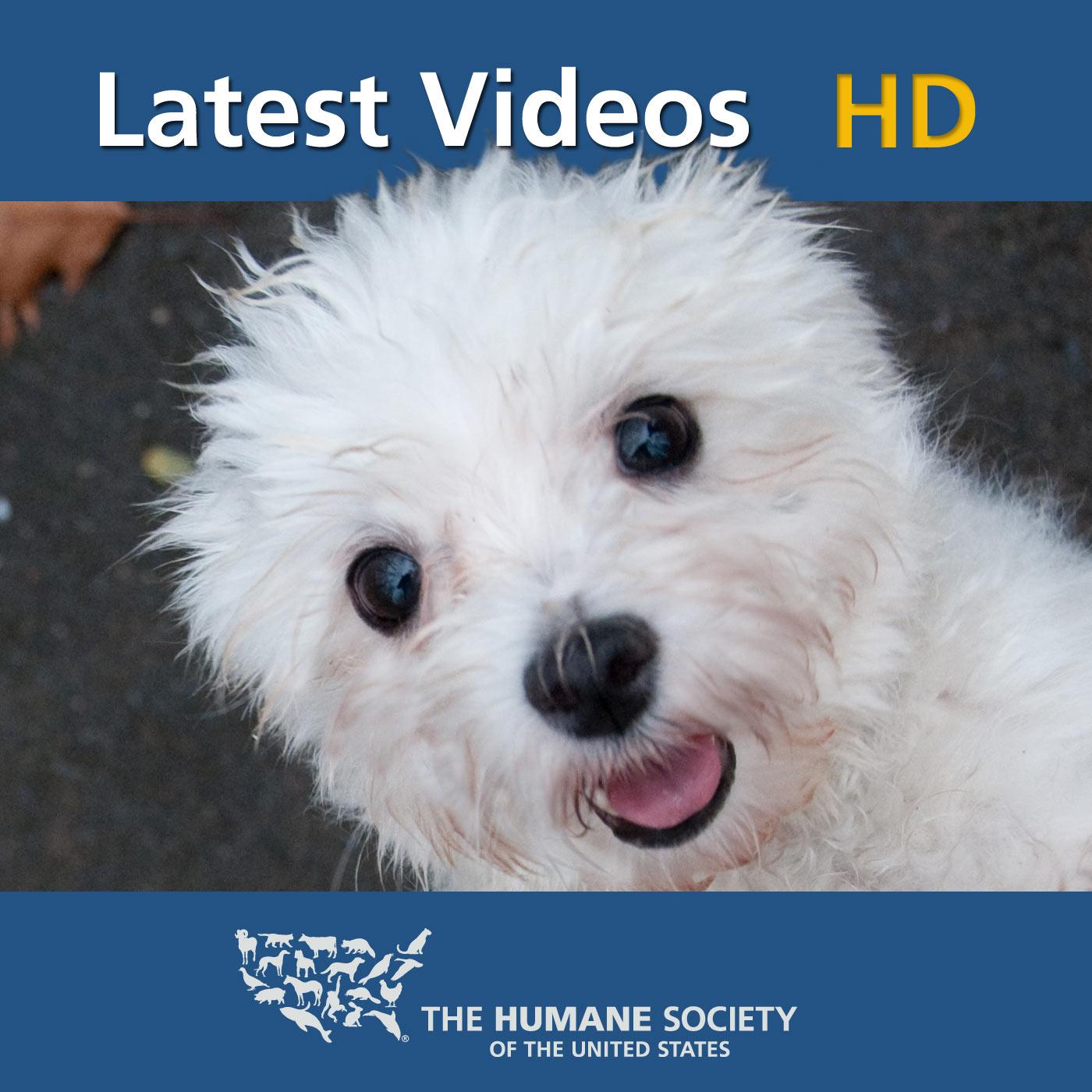Humane Society: HD Latest Videos